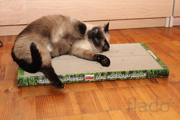 Новое поколение когтеточек-лежанок для кошек в Вологодской области.