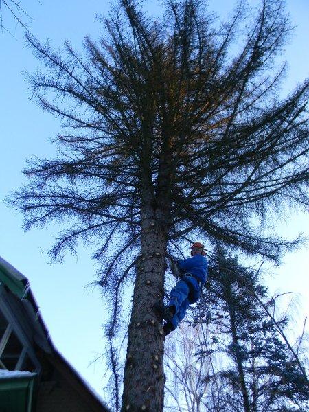 Нужно спилить дерево на участке в Загорянском .