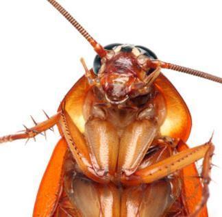 Уничтожение клопов, тараканов, блох, муравьёв.