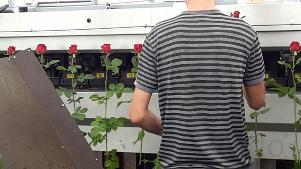 Работник в цветочную оранжерею