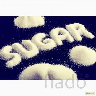 На постоянной основе, на экспорт свекловичный, тростниковый сахар. .