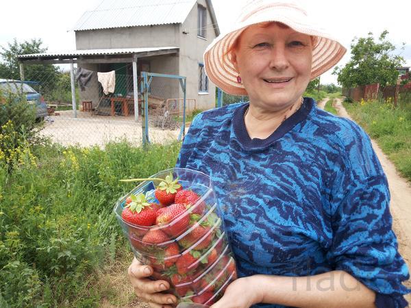 Продаю Саженцы ежевики, клубники, малины, смородины, крыжовника, калин
