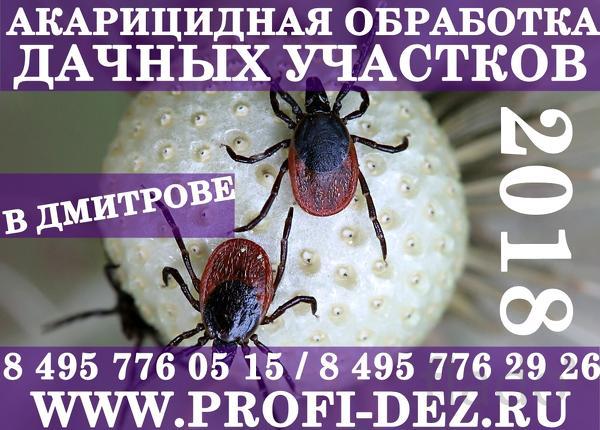 Обработка дачного участка от клещей (уничтожение клещей) в Дмитрове