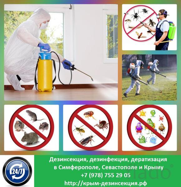 Дезинсекция, дератизация, дезинфекция Севастополь, Крым. Мы их или они