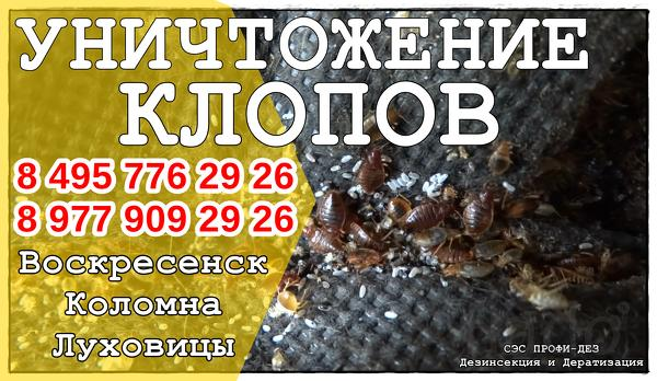 Уничтожение/дезинсекция клопов,тараканов,блох сэс Профи-Дез в Коломне