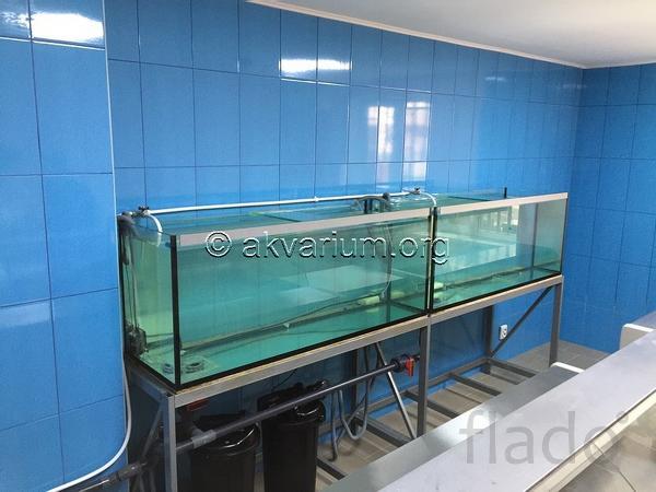 Изготовление торговых аквариумов под ключ в Крыму