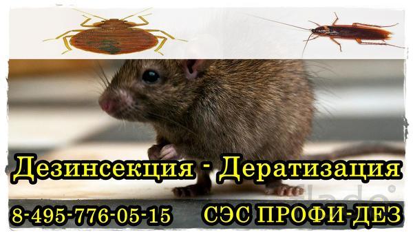Уничтожение клопов,тараканов,блох./дезинсекция профи-дез сэс Балашиха