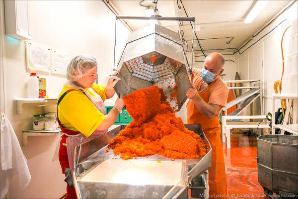 Фасовщик лососевой икры(вахта с питанием 30/15 с перевахтовкой)