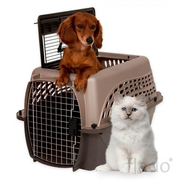Перевозка домашних животных из Черкесска в другой город
