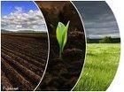 Купить землю плодородную,купить грунт в мешках,земля в мешках(сеянная)