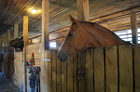 Постой лошадей, аренда лошадей, тренинг лошадей