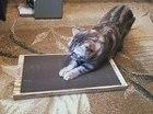 Когтеточки для кошек в Карелии.