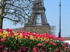 Углублённое изучение французского, подготовка к экзаменам, Кропоткинск