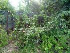 Расчистка участка. Покос травы. Вырубка дерева.Земляные работы