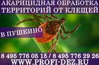Обработка дачного участка от клещей (уничтожение клещей) в Пушкино