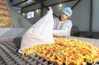 Укладчик овощей глубокой заморозки (вахтовый метод)