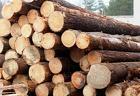 Круглый лес МО Воскресенск