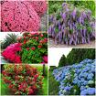 Цветы саженцы растения