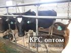 Высокопродуктивный молодняк молочных пород