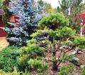 Уход за зелеными насаждениями, садом