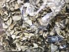 Сухой белый гриб разных сортов