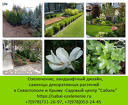 Озеленение участка Севастополь, Крым. Ландшафтный дизайн