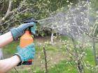 Защита садовых деревьев, растений от вредителей в Москве