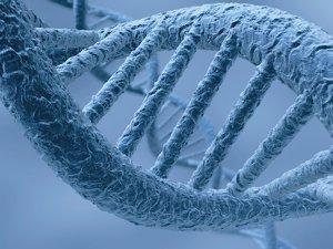 Ученые нашли хромосомы человека, отвечающие за время смерти