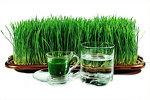 Свежевыжатый сок из ростков пшеницы