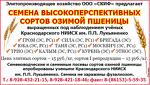 """ООО """"СКИФ"""""""