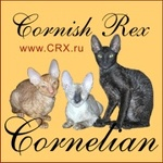 CORNELIAN - питомник кошек корниш-рекс