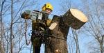 Спилка деревьев любой сложности