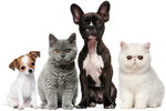 Royal Pets / Роял Петс