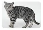 Ветеринарная служба «Доброкот24»