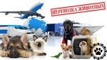 Animals Travel
