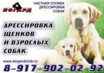 Дрессировочный центр в г. Альметьевск