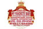 купить шпица в Тольятти