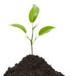 Питомник растений Рассада для всех
